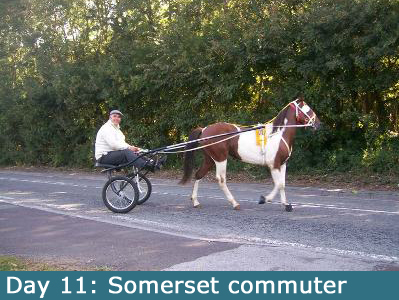 One of the stranger sights of Somerset